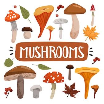 Набор различных видов грибов и осенних листьев.