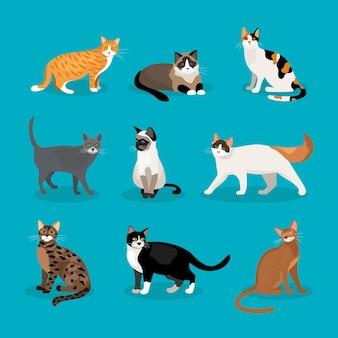 青い背景の上に座って歩いて立っているさまざまな品種と毛皮の色を描いたベクトル猫のセット