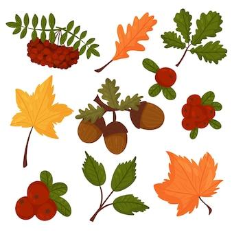 가 스타일의 벡터 요소 집합입니다. 잎, 도토리, 열매, 크랜베리, 산 애쉬. 벡터 만화 스타일입니다.