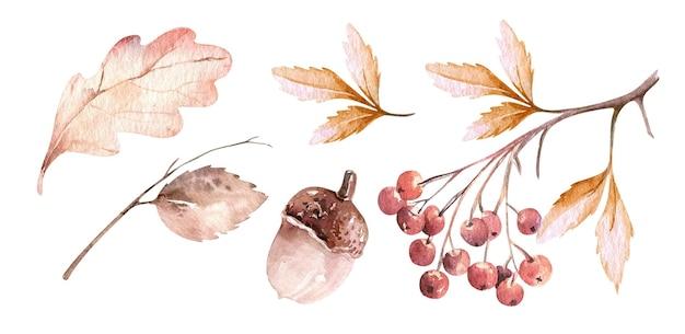 Набор векторных в осеннем стиле акварель оставляет желуди и ягоды