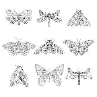 벡터 밤 나비 나방 손으로 그린 그림 세트