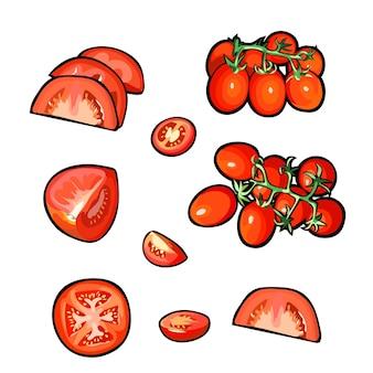 Набор векторных ломтиков помидора на белом фоне