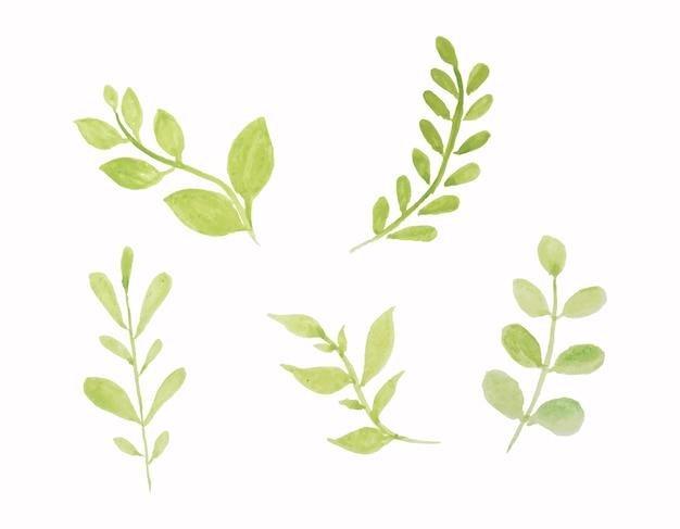 벡터 수채화 잎의 집합입니다.