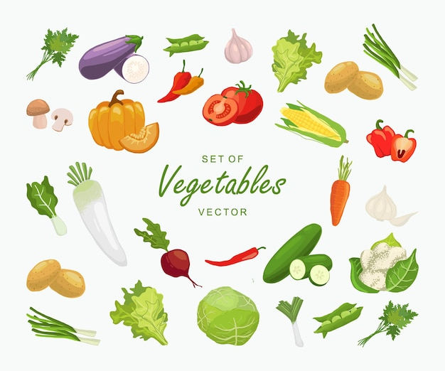 Набор овощных иллюстраций вектора