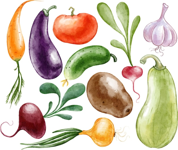 Набор овощей, огурцов, помидоров, свеклы, картофеля, луков, кабачков, окрашенных акварелью
