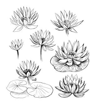 Набор водяной лилии. лотос. рисованный контур