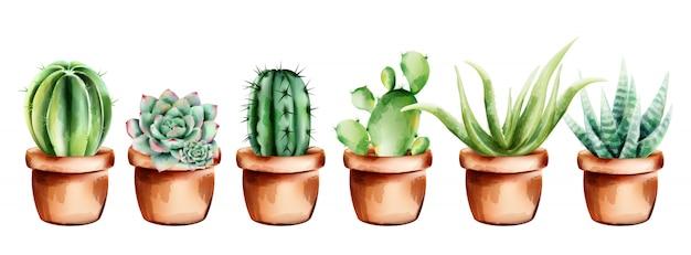 Набор акварельных кактусов, алоэ вера и цветов в керамическом горшке