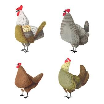 水彩の鶏と鶏のセット