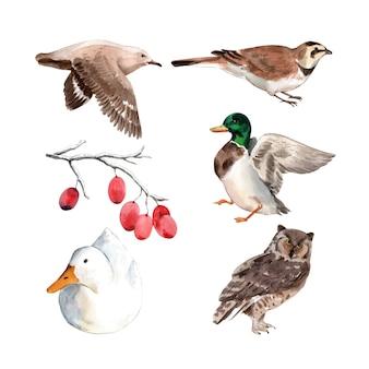 水彩のアヒル、鳥のイラストのセットです。