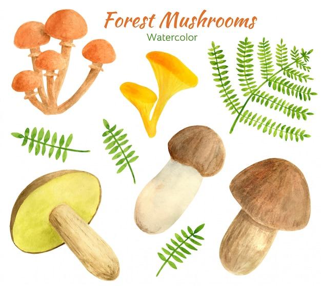 Набор акварельных съедобных грибов с листьями папоротника