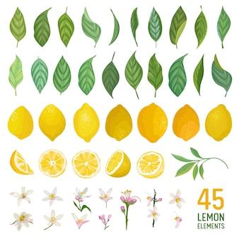 Набор акварельных элементов лимонов, листьев и цветов для плакатов, ярких летних баннеров, шаблонов дизайна обложек, историй в социальных сетях, весенних обоев. векторная иллюстрация
