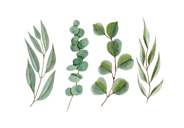 Набор акварельных листьев эвкалипта ветви, изолированные на белом