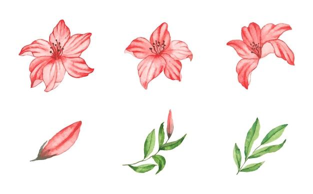 水彩花と葉のセット