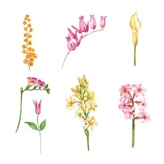 수채화 꽃 봉 오리와 단풍, 고립 된 요소의 그림의 집합