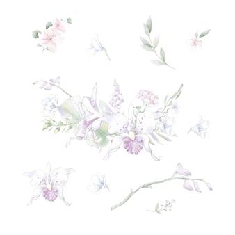 水彩花蘭のセット、分離された水彩イラスト