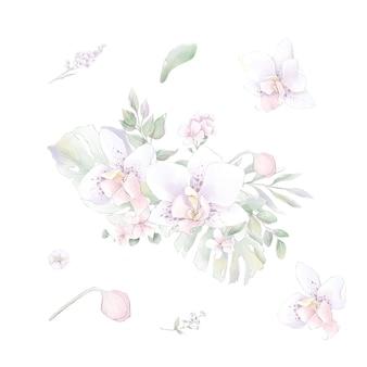 Набор акварельных цветов орхидей, изолированные акварельные иллюстрации
