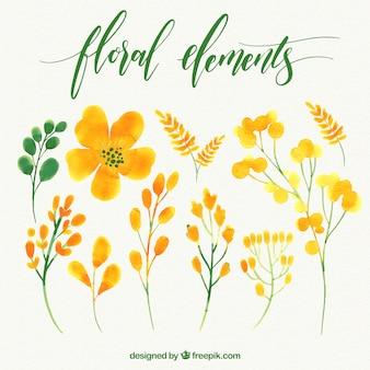 水彩画の花のセット