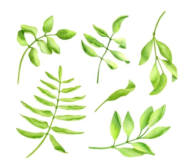 Набор акварельных зеленых листьев, рисованной коллекции свежей зелени