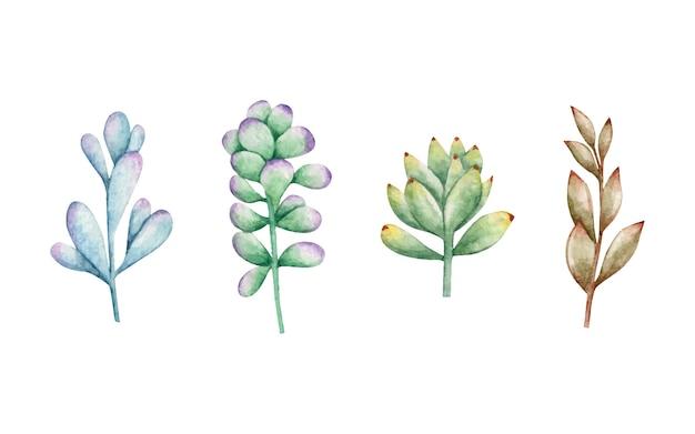 수채화 손으로 그린 즙이 많은 식물 세트