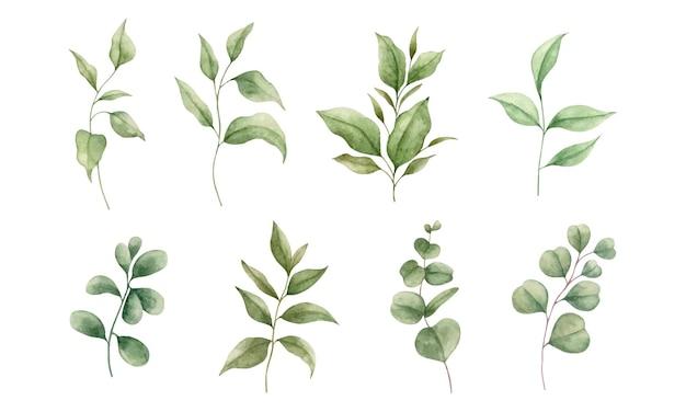 Набор акварели ручная роспись зеленых листьев и ветвей коллекции