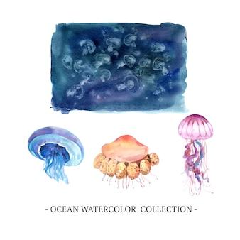 水彩クラゲ、白い背景の上のイラストのセット。