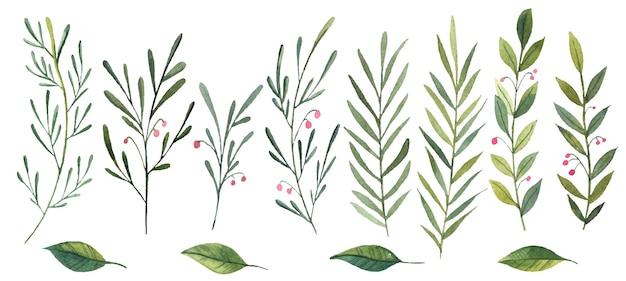 Набор акварельных листьев и ветвей