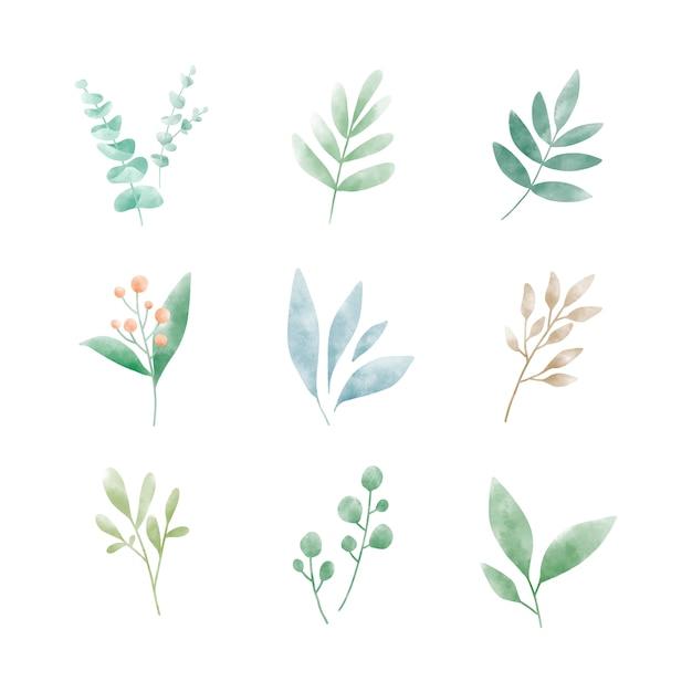 Набор векторов акварельных листьев