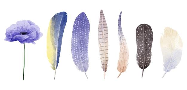다양한 깃털의 수채화 세트