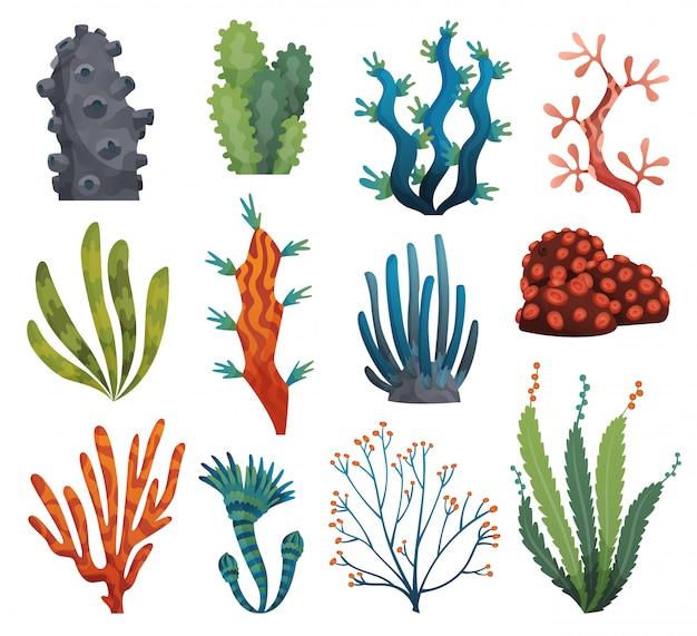 水彩の海藻とサンゴは、白い背景で隔離のセットです。水中の藻。水族館の植物のコレクション。水中植物相