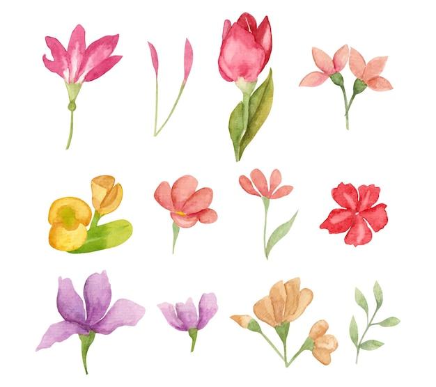 水彩の春の花と葉のセット