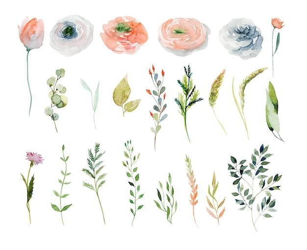 水彩画の春の植物、ピンクと白のバラ、野花、緑の枝のセット