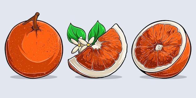 수채화 달콤한 오렌지, 전체 및 슬라이스 오렌지 과일 세트