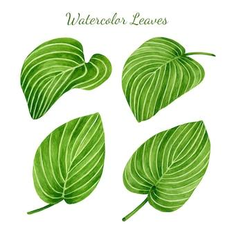 Набор акварельных тропических листьев