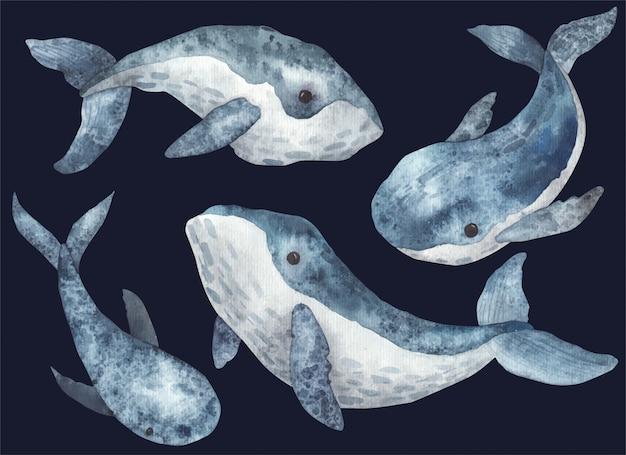 Набор китов акварельные иллюстрации на белом фоне