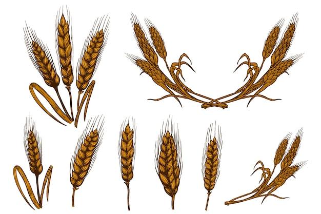 白い背景で隔離の小麦小穂イラストのセットです。ポスター、カード、エンブレム、サイン、カード、バナーのデザイン要素。画像