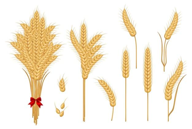 Набор пшеничных желтых спелых колосков и зерен