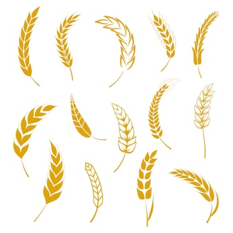 Набор колосьев пшеницы