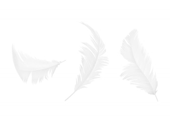 Set of white bird or angel feathers in various shapes, isolated on background