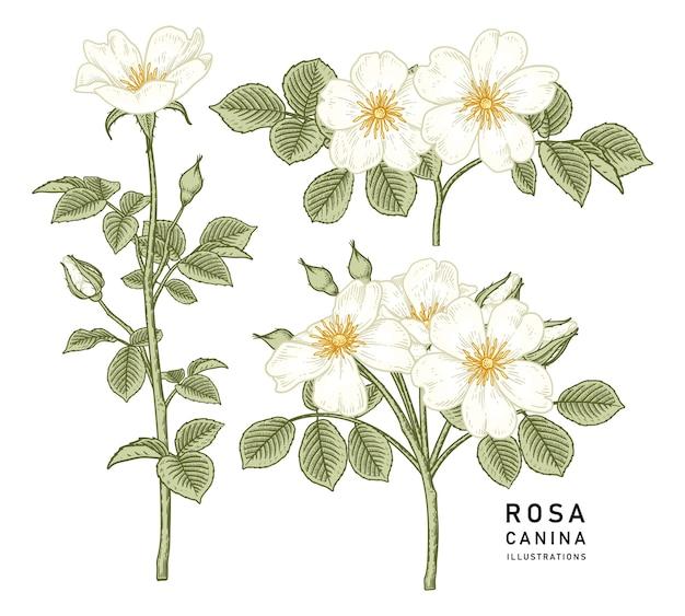 Набор белый цветок, изолированные на белом фоне