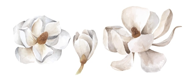 Набор белой магнолии. акварельные иллюстрации
