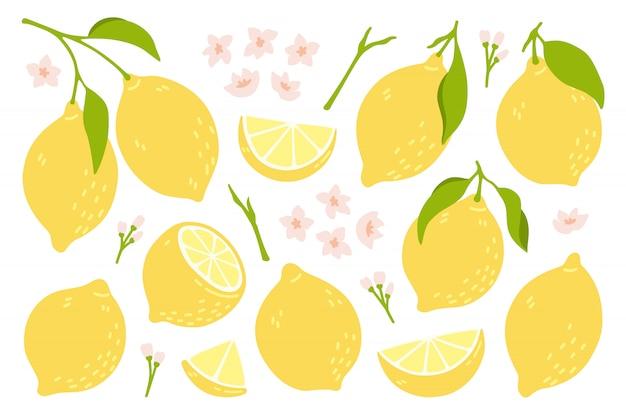Набор целых, разрезанных пополам, нарезанных на кусочки свежих лимонов. коллекция цитрусовых с цедрой лимона, цветами и листьями в стиле рисованной. векторные иллюстрации на белом фоне.