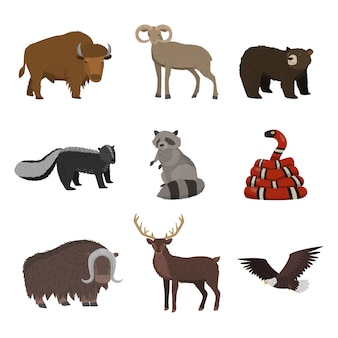 흰색 배경에 고립 된 북미에서 야생 동물 세트