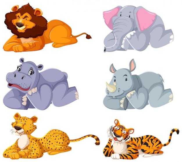 Набор диких животных, устанавливающих