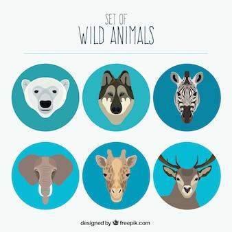야생 동물 세트