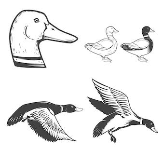 흰색 바탕에 야생 오리 아이콘 세트 오리 사냥. 로고, 라벨, 배지, 기호에 대 한 요소. 삽화