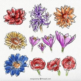야생 손으로 그린 수채화 꽃 세트