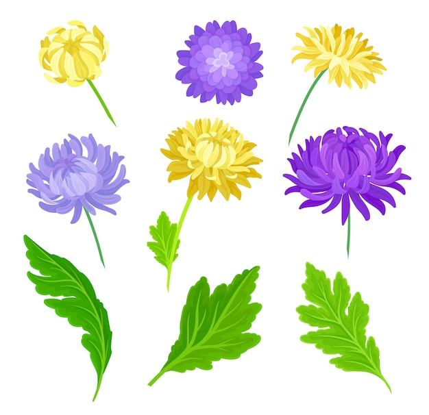 노란색, 보라색 꽃과 잎의 집합입니다. 흰색 배경에 그림입니다.
