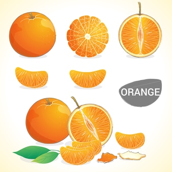 Set of orange fruit  in various styles vector format