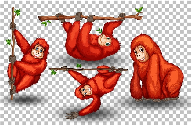 Set of orangutan on transparent