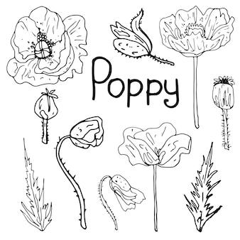 孤立した白い背景に蘭の葉と花を設定します輪郭は手描きです
